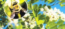 """LODR zaprasza na Konferencję """"Pszczoły Przyszłością Rolnictwa"""""""